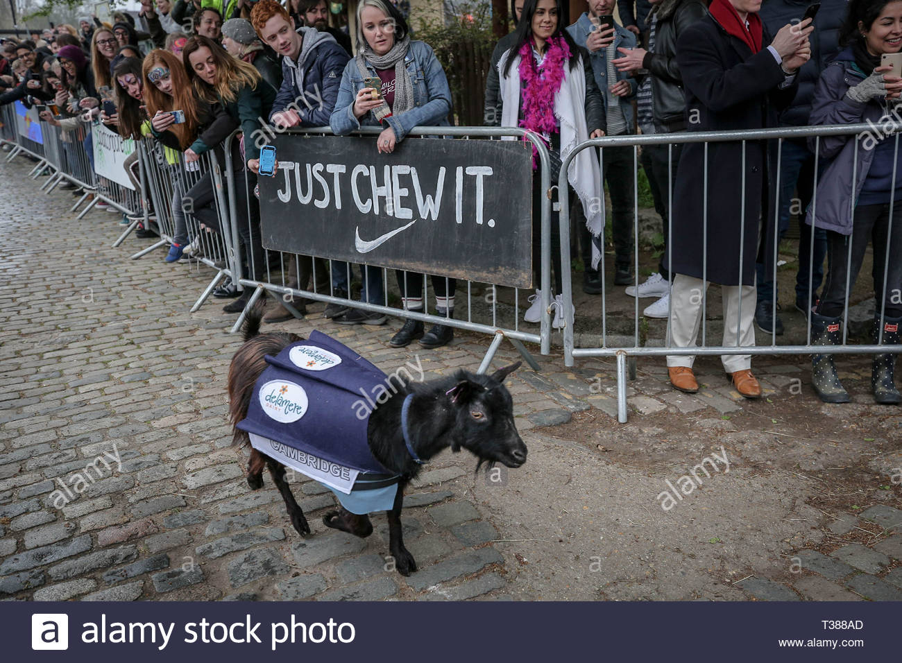 London, UK. 7th April 2019. 11th Annual Oxford vs Cambridge Goat Race at Spitalfields City Farm. Credit: Guy Corbishley/Alamy Live News - Stock Image