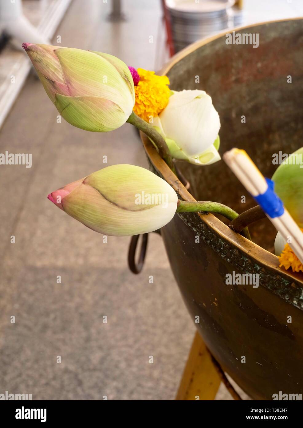 Buddhist Putting Incense Sticks And Lotus Flowers In Religion Bowl To Worship Pay Respect And Make Merit With The Buddha In The Temple Stock Photo Alamy