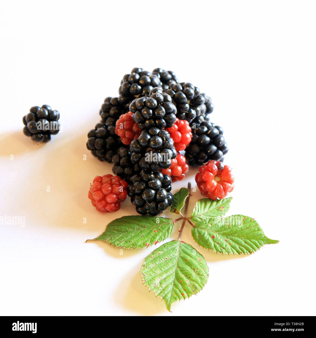 blackberries on white background - Stock Image