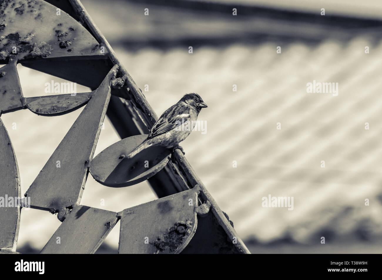 Little bird standing on a metal structure full of rust. Picture taken in Punta del Este, Uruguay - Stock Image