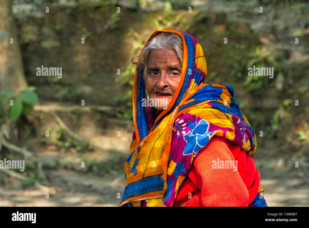 Old woman, Tangail district, Dhaka Division, Bangladesh - Stock Image