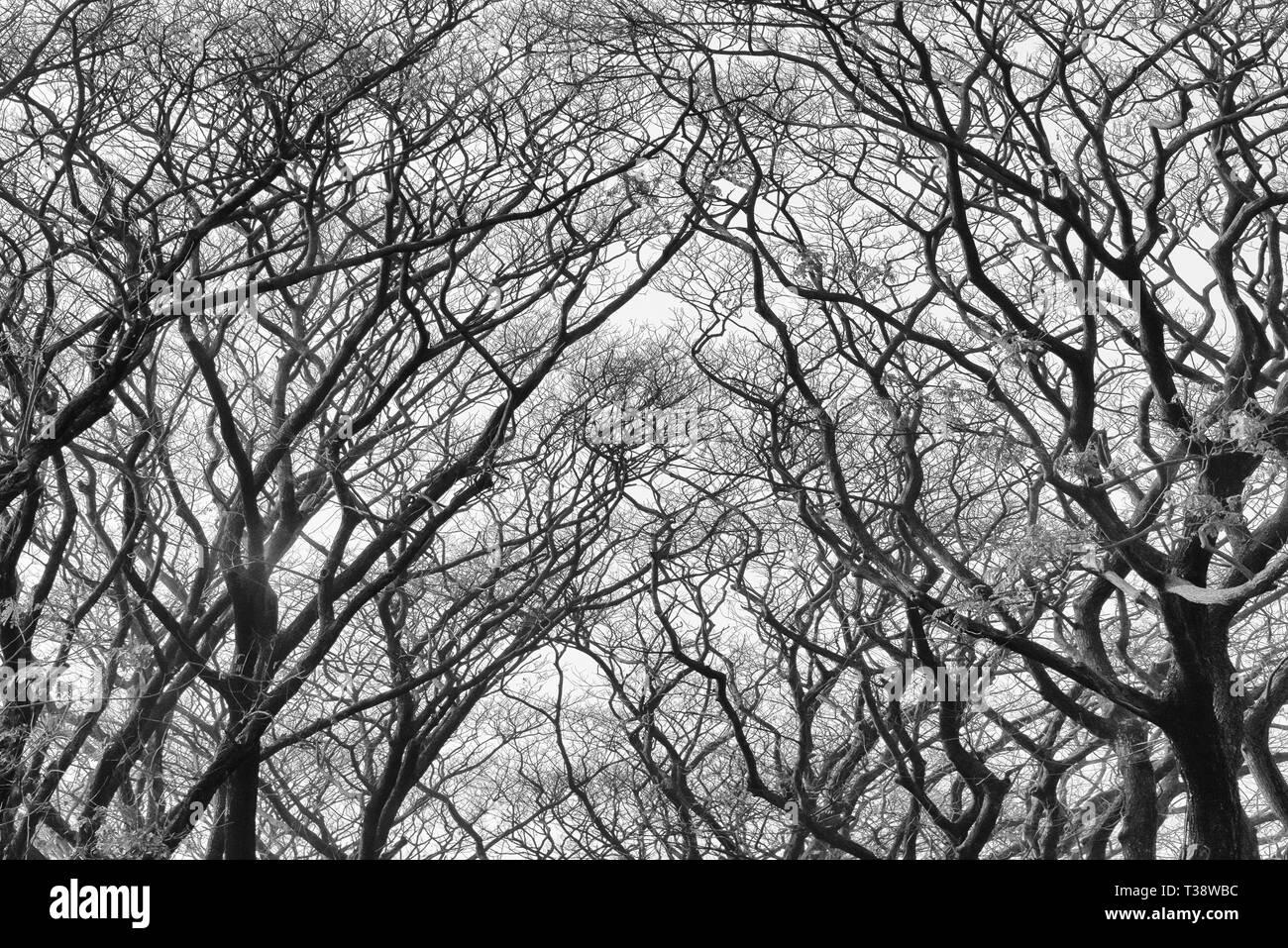 Trees, Dhaka, Bangladesh - Stock Image