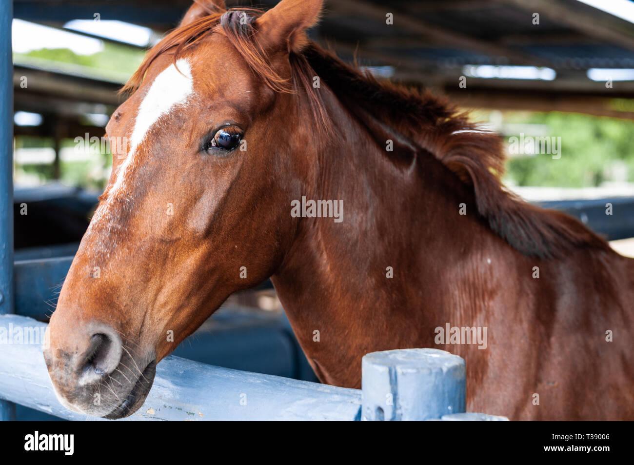Portraits Other Photographs Of Horses Stock Photo Alamy