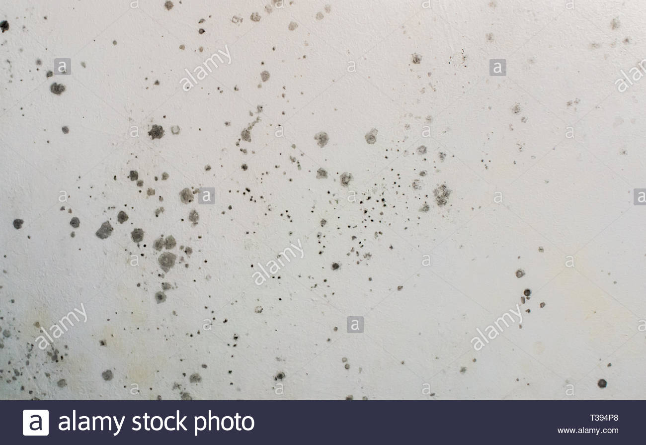 Toxic mold growing and developing on a white wall. Black spots and stains of fungus bacteria. Concept of damp, moisture, condensation and humidity. - Stock Image