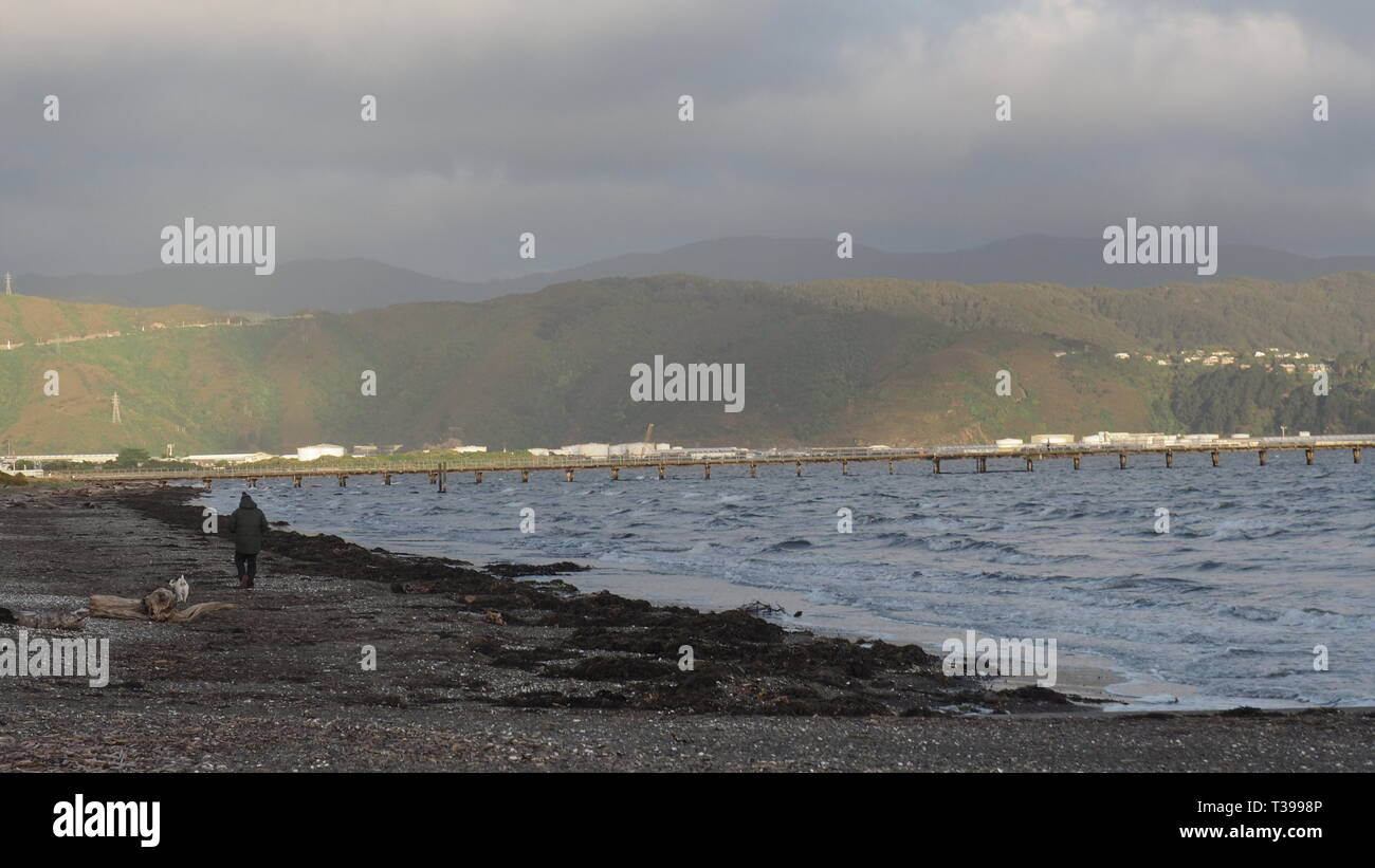 A man and his dog walk on Petone Beach on a late autumn afternoon after a storm - Stock Image