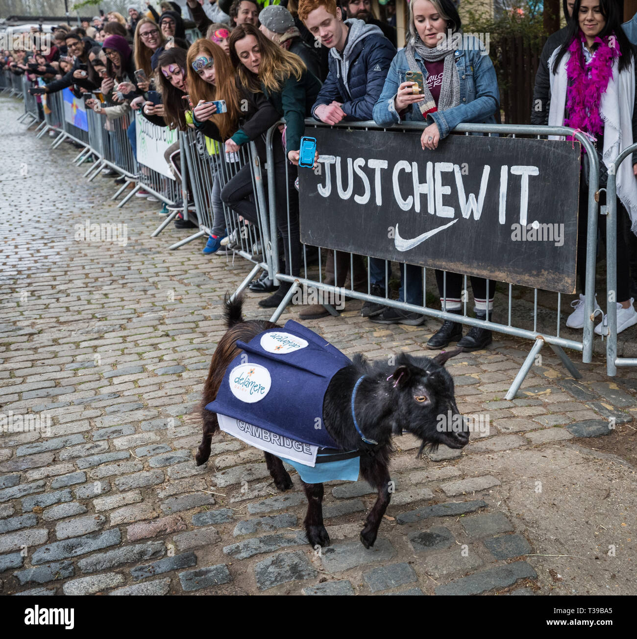 London, UK. 7th April, 2019. 11th Annual Oxford vs Cambridge Goat Race at Spitalfields City Farm in east London. Credit: Guy Corbishley/Alamy Live New - Stock Image