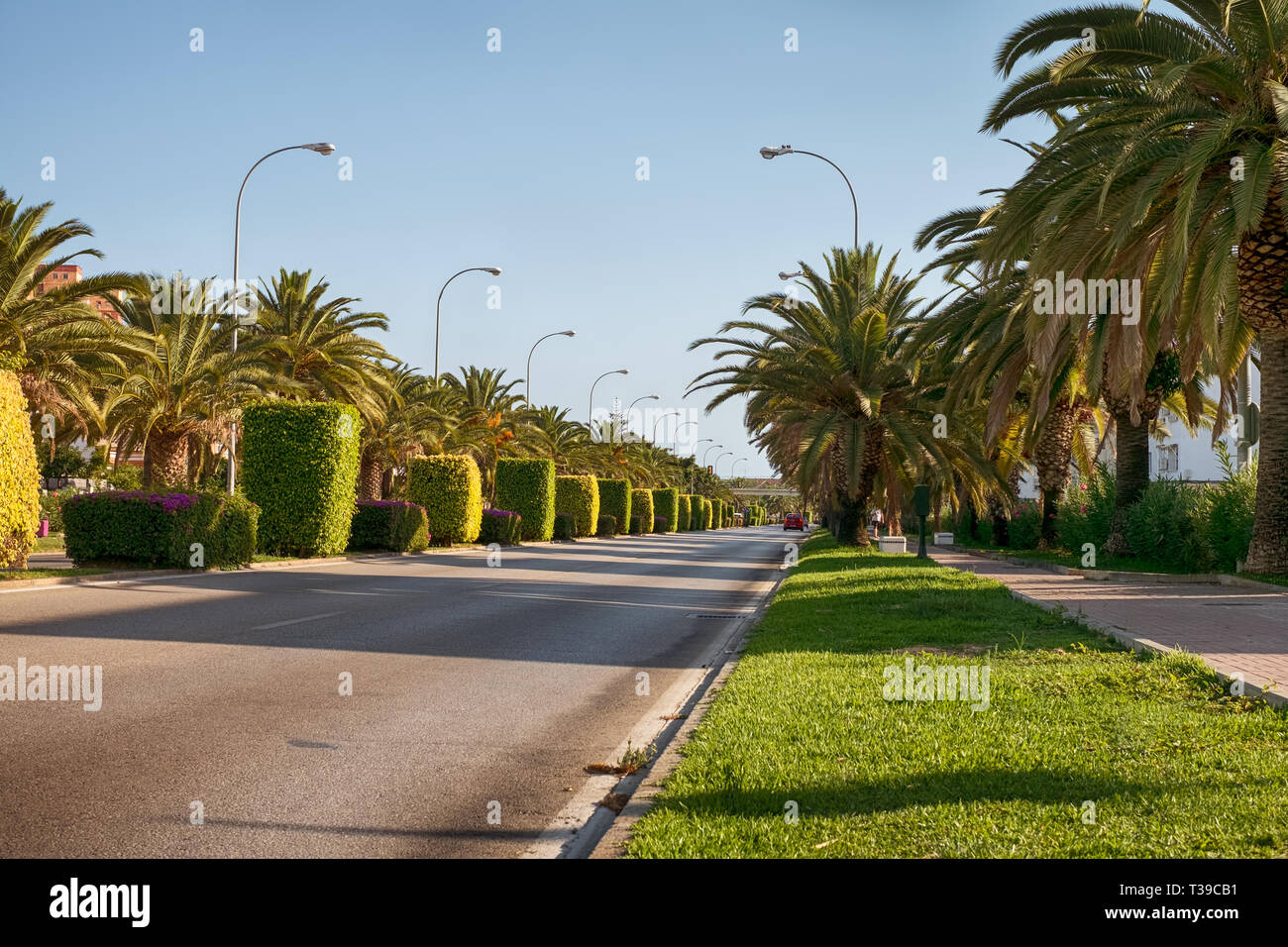 empty Jacinto Benavente street with palms tree and ornamentals plants in Malaga city, Andalucia, Spain - Stock Image