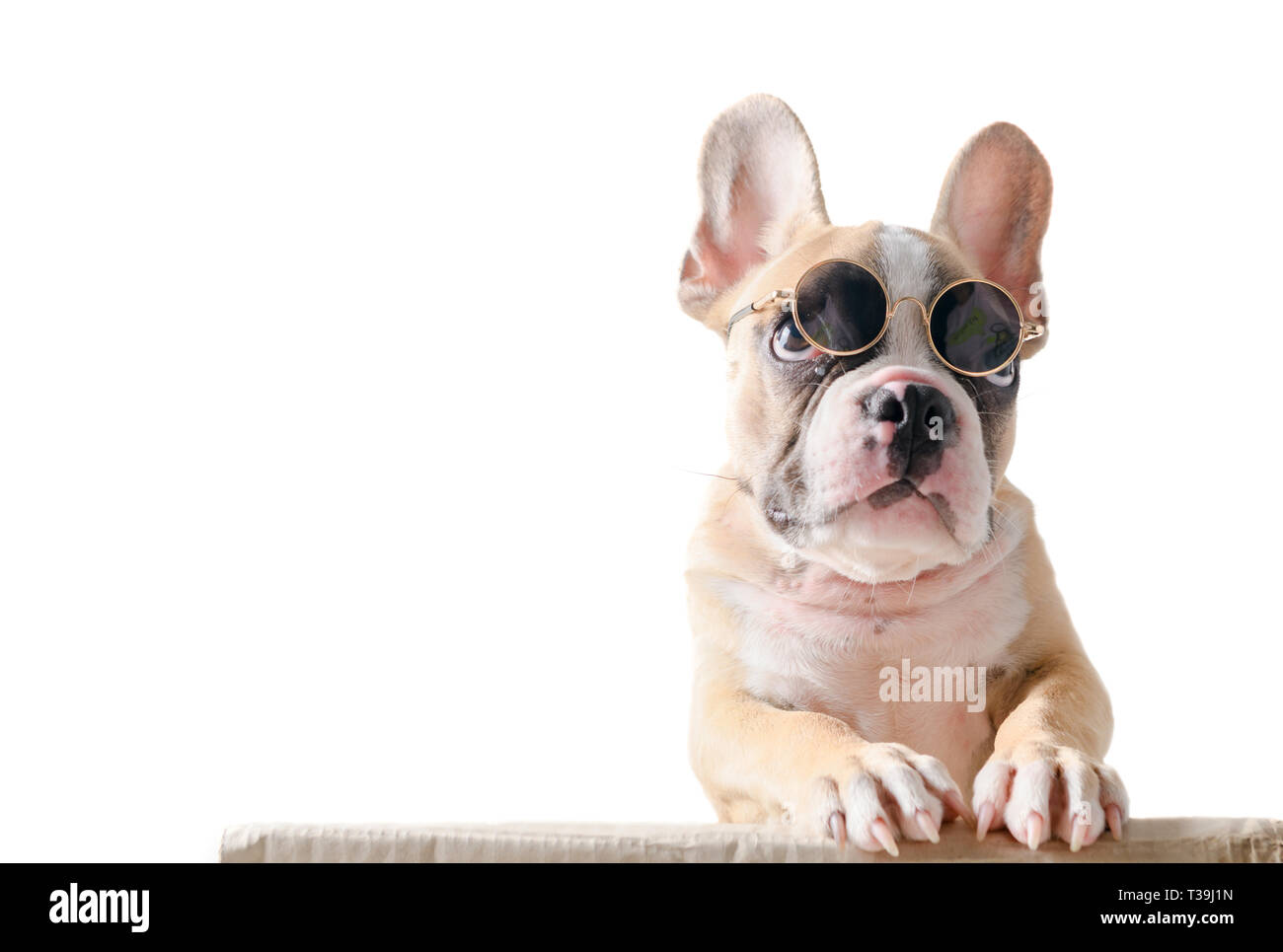 7bd93a30 Cute french bulldog wear sunglass stand on box isolated on white background,  pet in summer