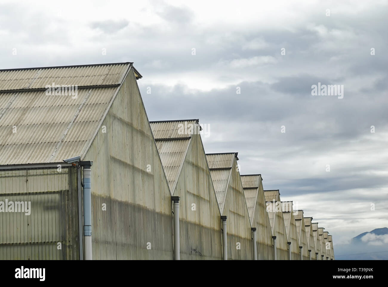 A row of gable roof greenhouses receding into the distance. - Stock Image