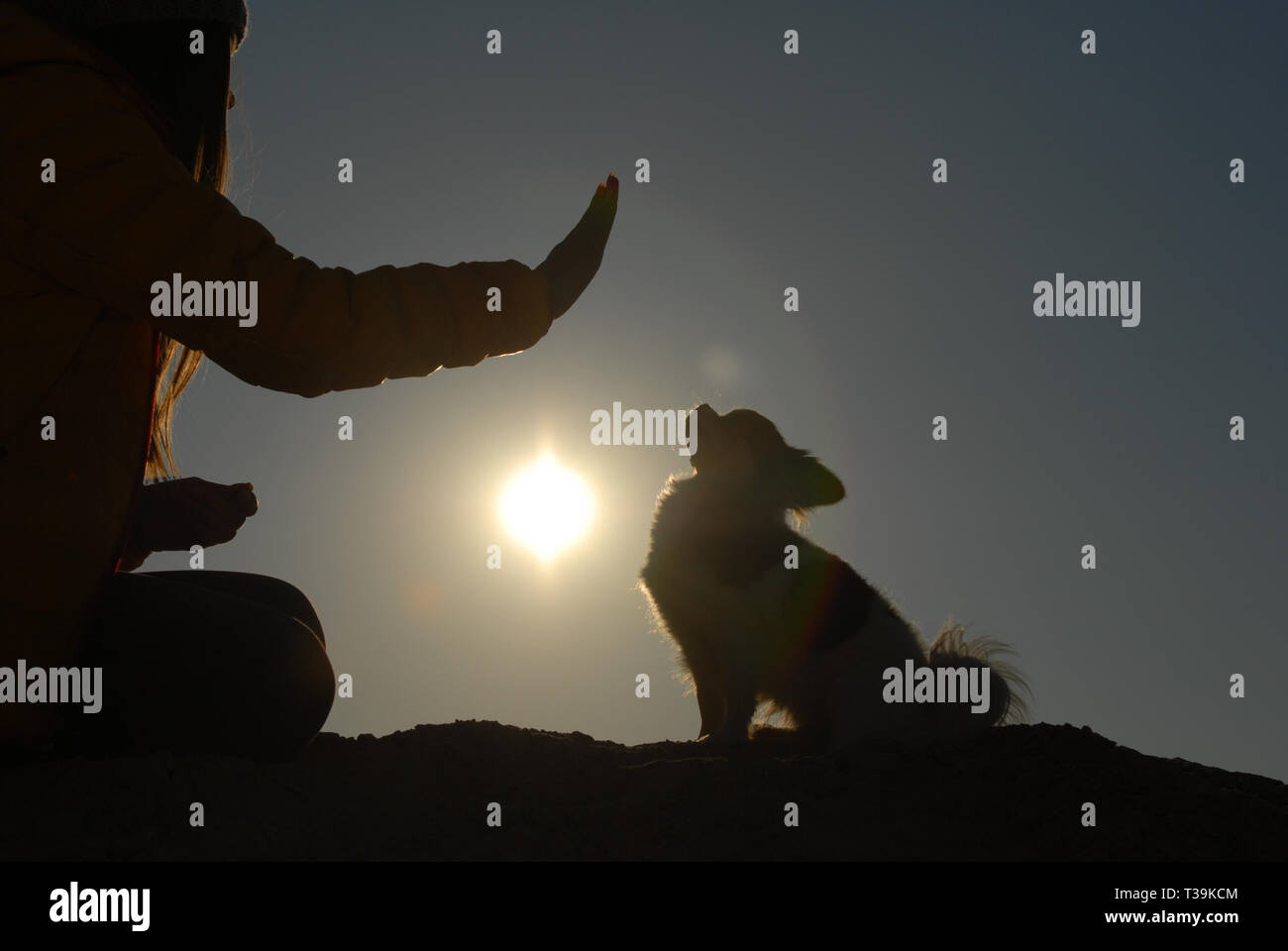 canine obedience concept of young dog trainer with hand gesture and little chihuahua dog sitting on sunset - Stock Image