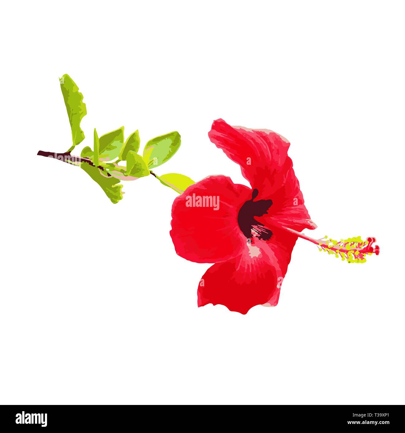Hibiscus Flower On A Branch Watercolor Drawing For Design And