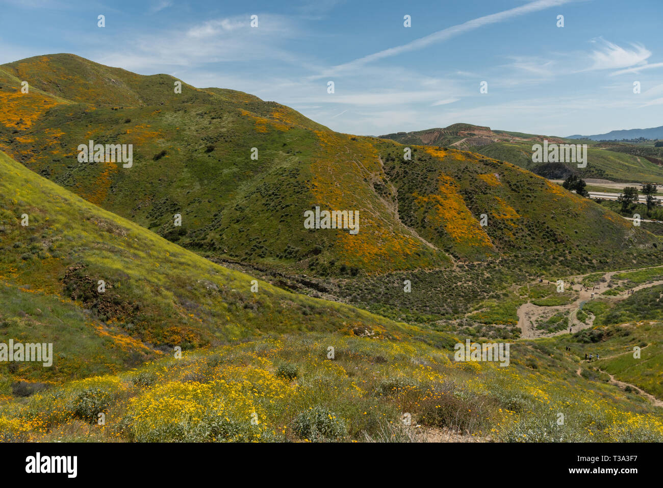 Beautiful superbloom vista in a mountain range near Lake Elsinore, Southern California - Stock Image
