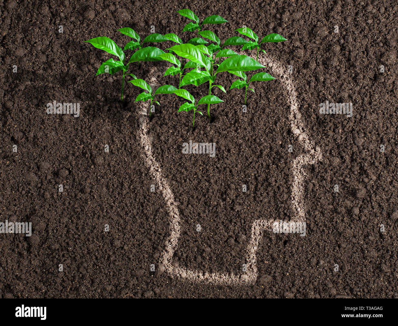 Ideas and initiative concept. Green leaves from human brain. - Stock Image