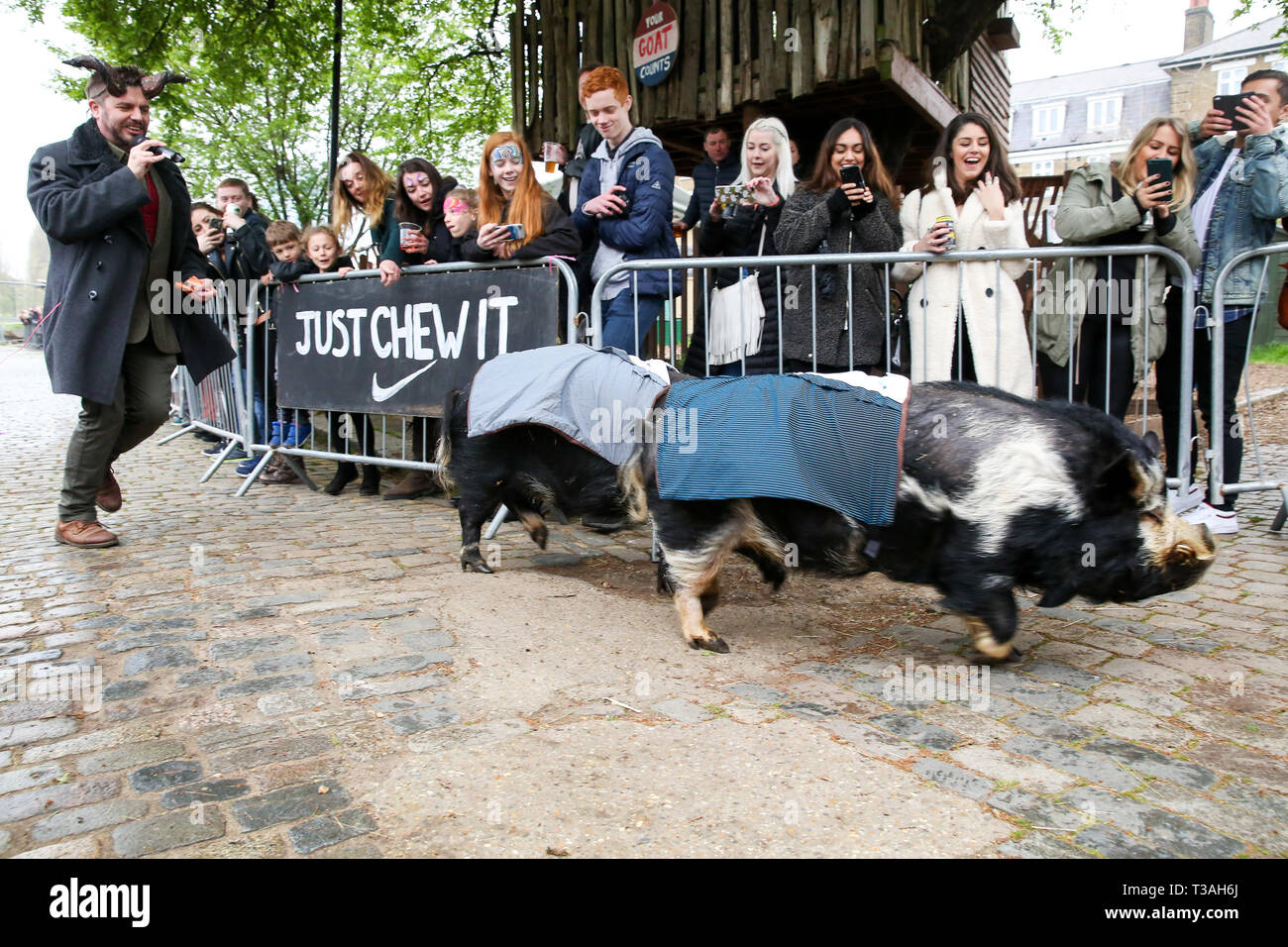 Two pigs are seen taking part in a race before the Oxford vs Cambridge Goat Race in East London. Two pygmy goats compete during the 10th Oxford and Cambridge Goat Race at Spitalfields City Farm, Bethnal Green in East London. The annual fundraising event, which takes place at the same time as the Oxford and Cambridge boat race, where two goats, one named Hamish representing Oxford and the other Hugo representing Cambridge to be crowned King Billy. - Stock Image