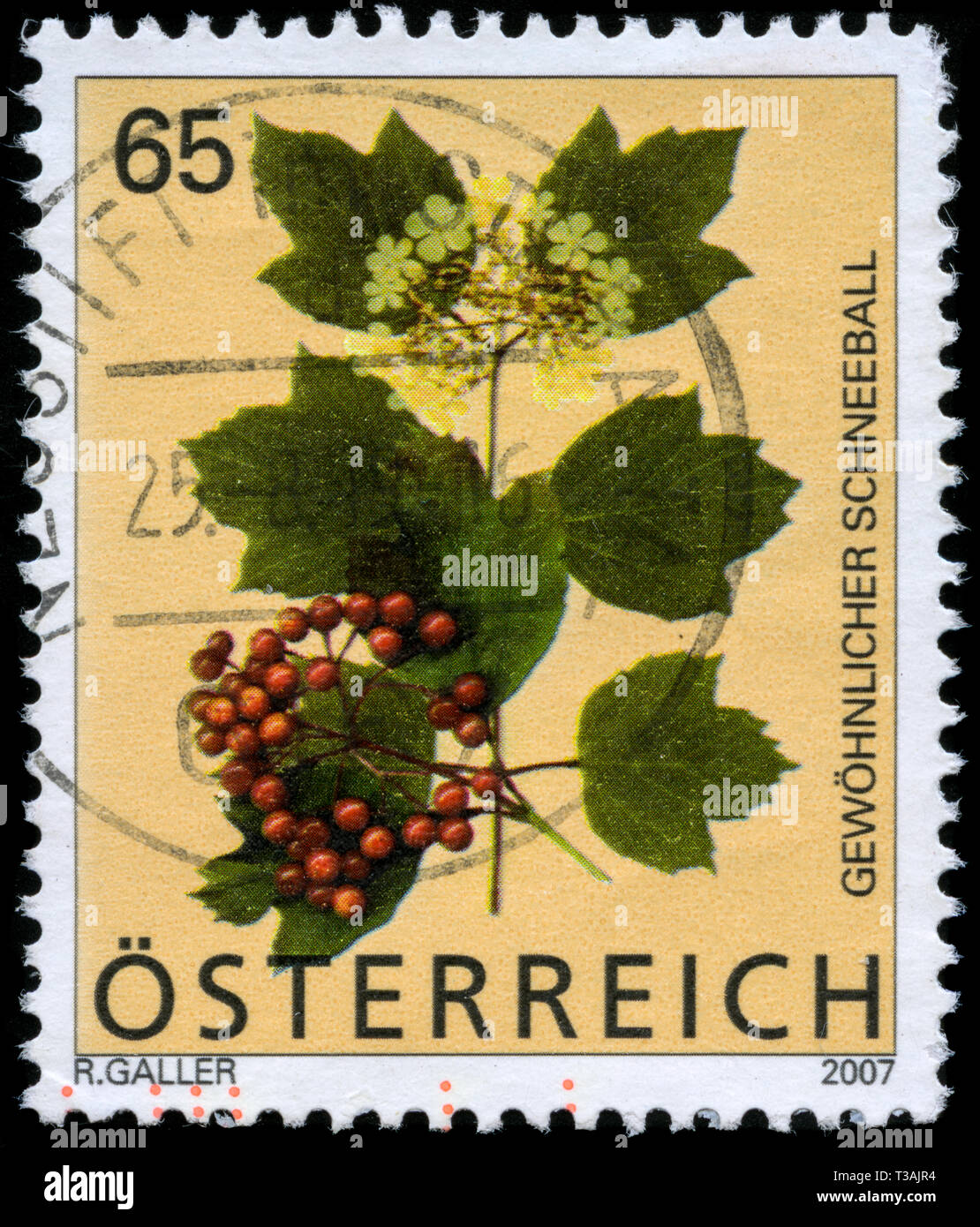 Postage stamp from Austria in the Alpine Flowers series issued in 2007 - Stock Image