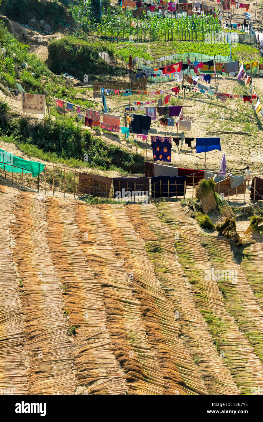 Drying broom grass along the riverbank of River Sangu, Bandarban, Chittagong Division, Bangladesh - Stock Image