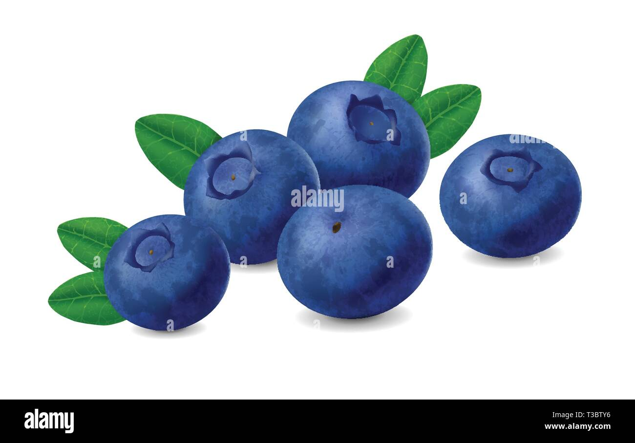 Blueberry isolated on white background. Realistic illustration - Stock Vector