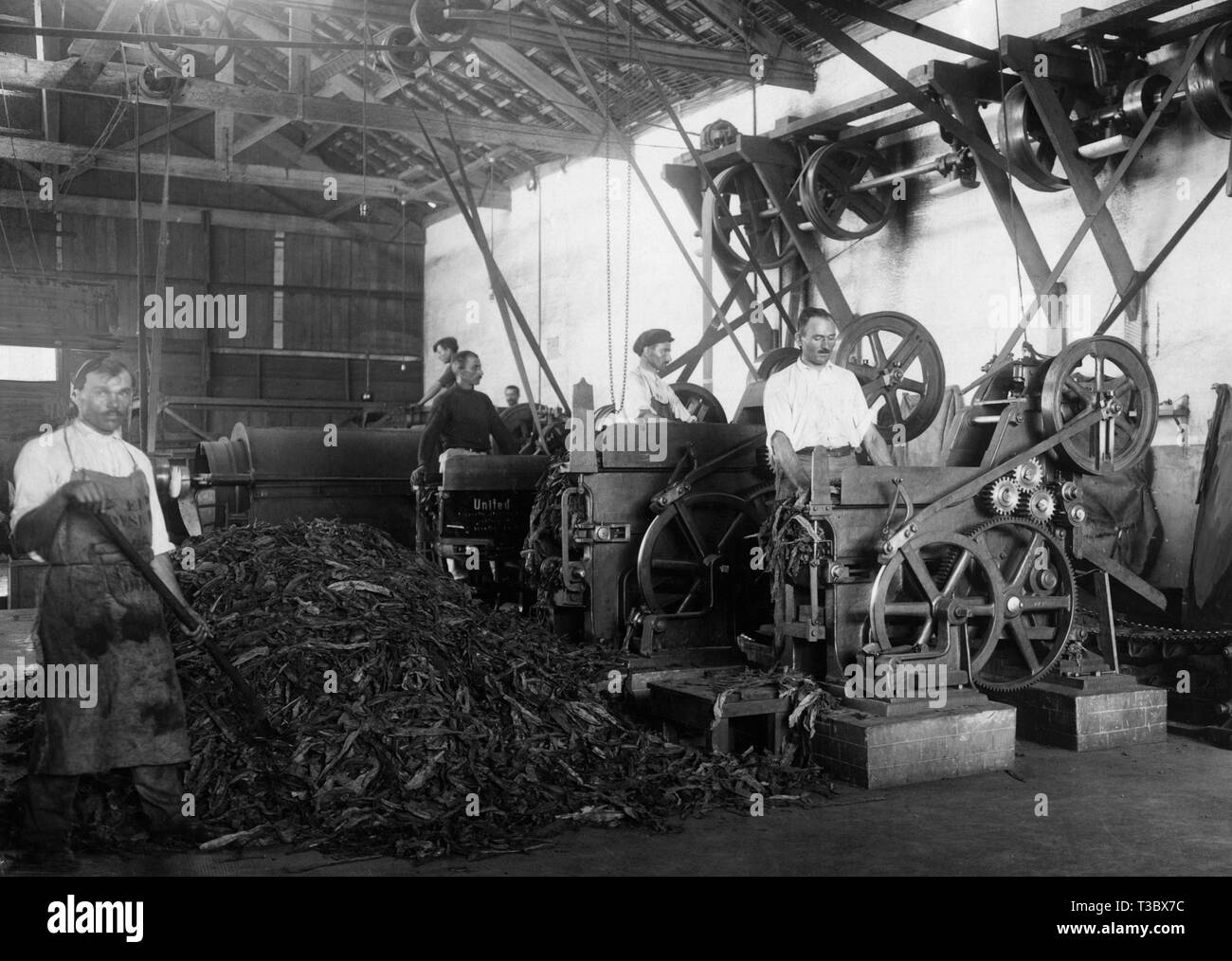 state tobacco agency, machines for cutting up tobacco, 1929 - Stock Image