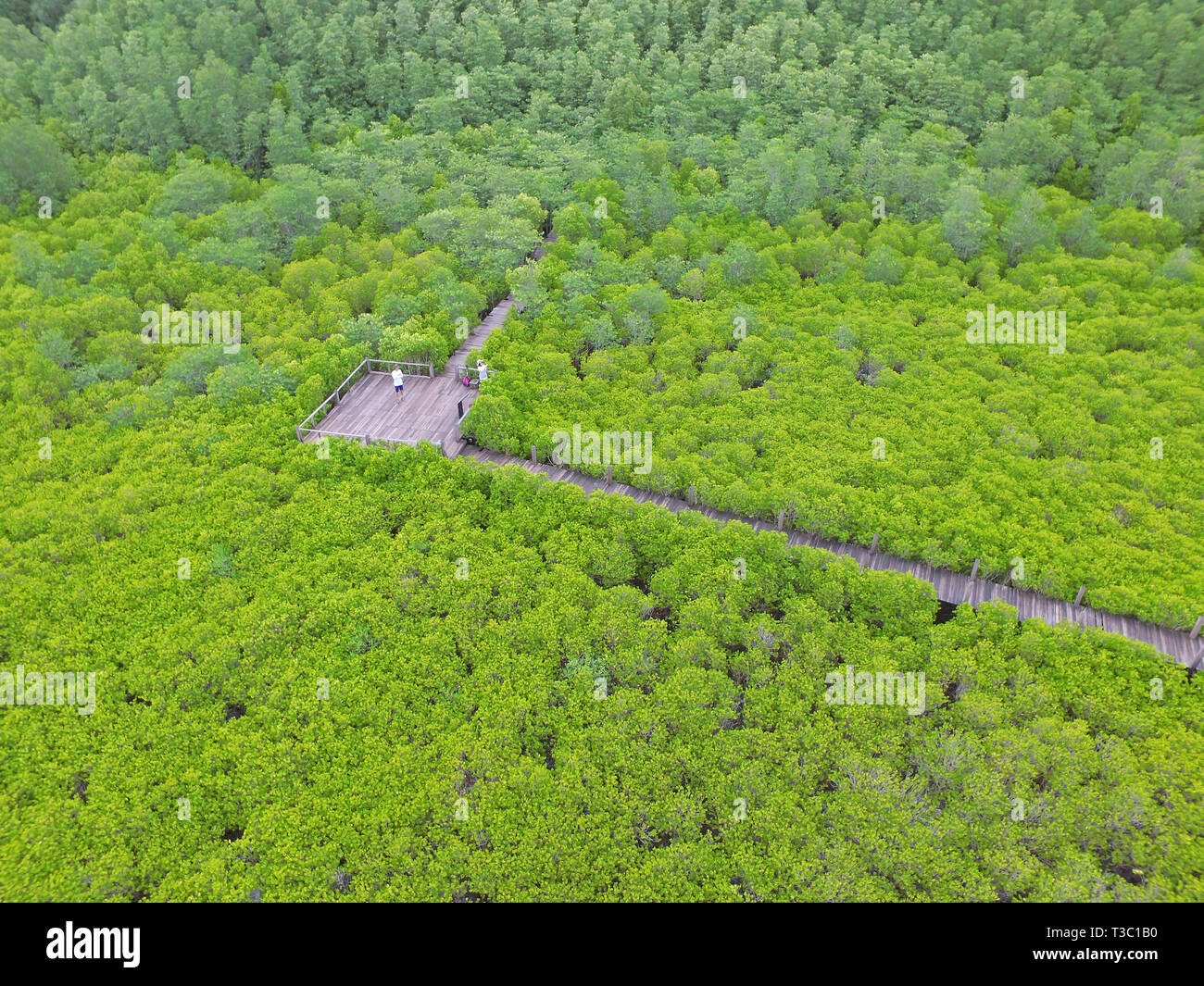 Bird Eye View by Drone of the Indian Mangrove Forest with a Couple Photographing on Wooden boardwalk, Rayong Province of Thailand - Stock Image