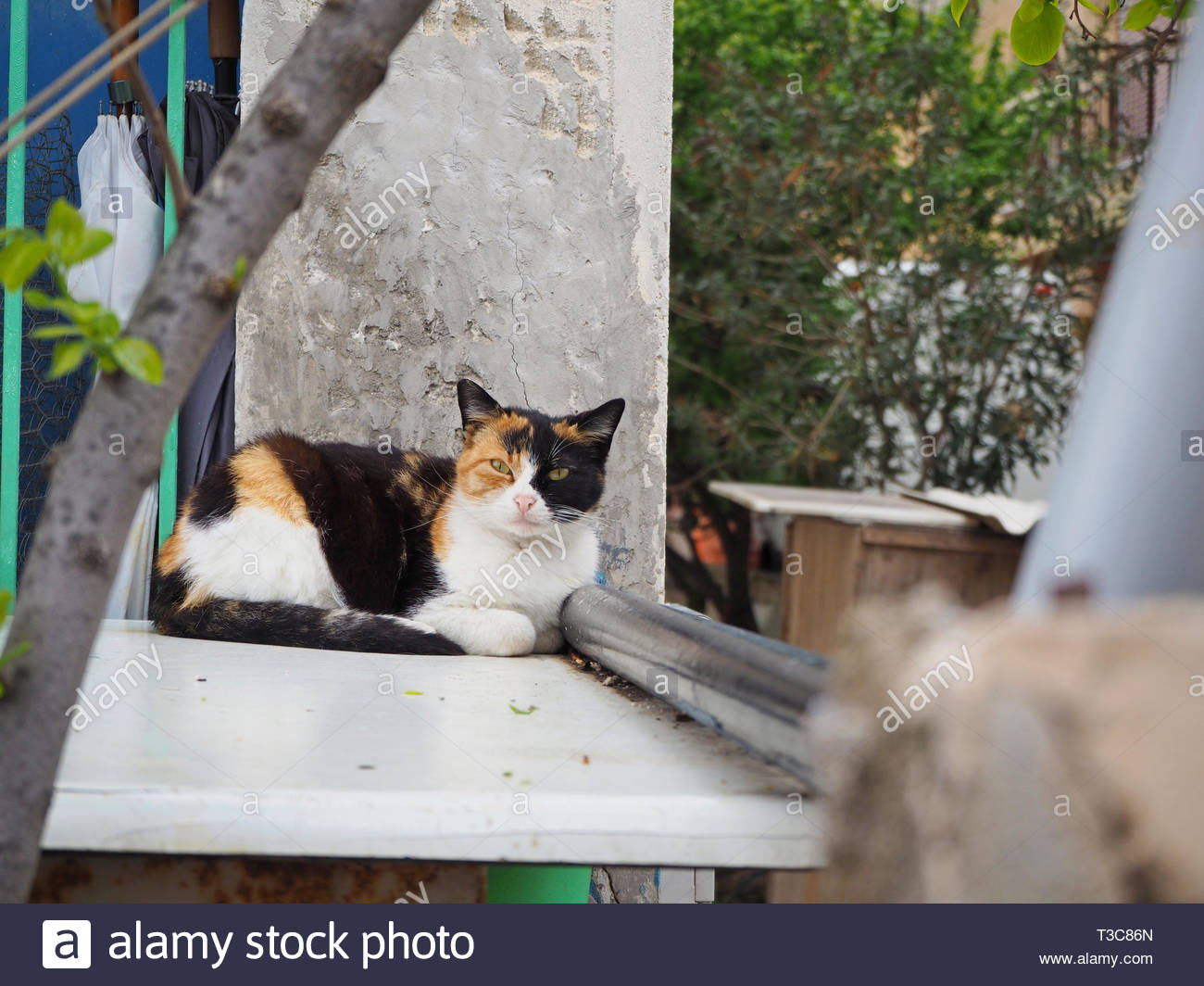 multi color stray cat relaxing Stock Photo
