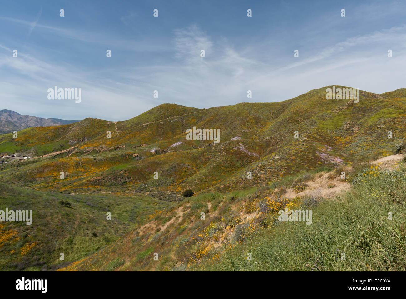 Beautiful superbloom vista in the Walker Canyon mountain range near Lake Elsinore, Southern California - Stock Image