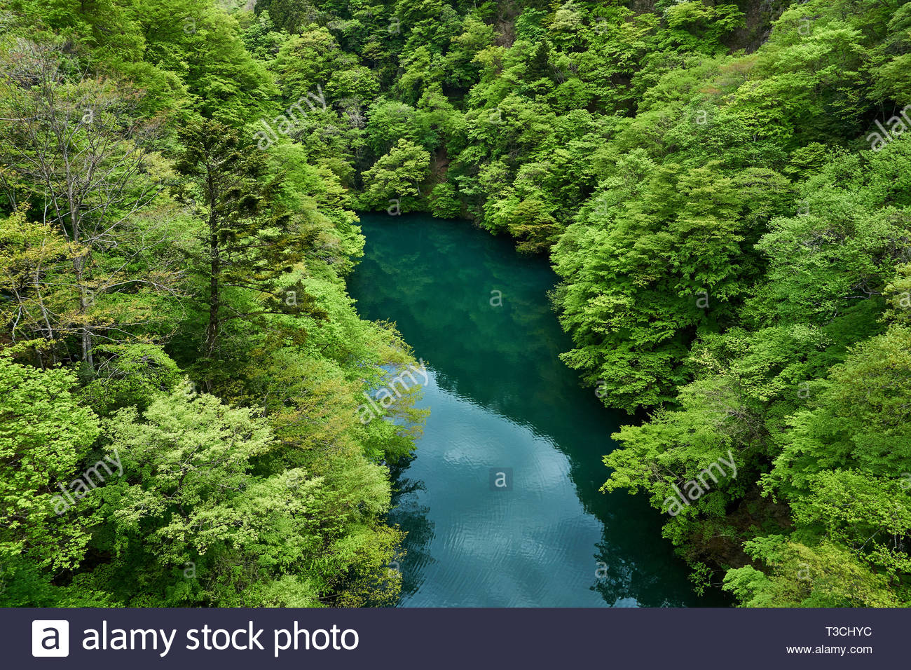 Deciduous trees growing on mountainsides reflect in the blue green water of a river in Sarugakyo village in Minakami, Gunma, Japan, in late spring. - Stock Image