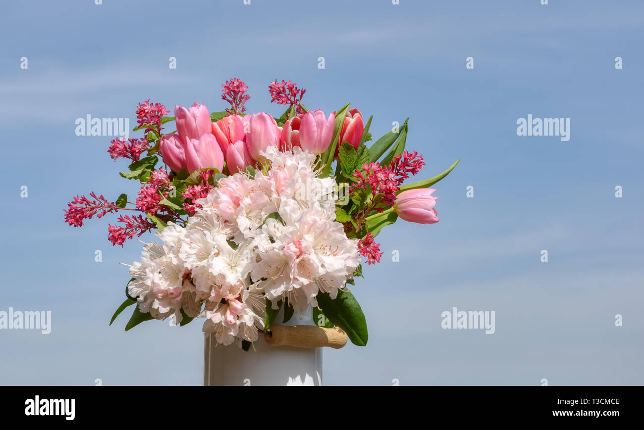 Colorful bouquet of pink and white spring flowers with tulips, white rhododendron blooms and weigela on a sunny day with blue sky Stock Photo