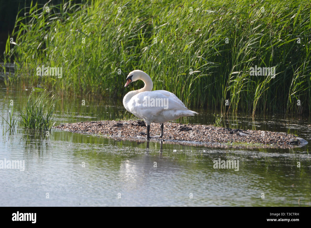The Hen Reedbeds, Southwold, Suffolk, UK Stock Photo