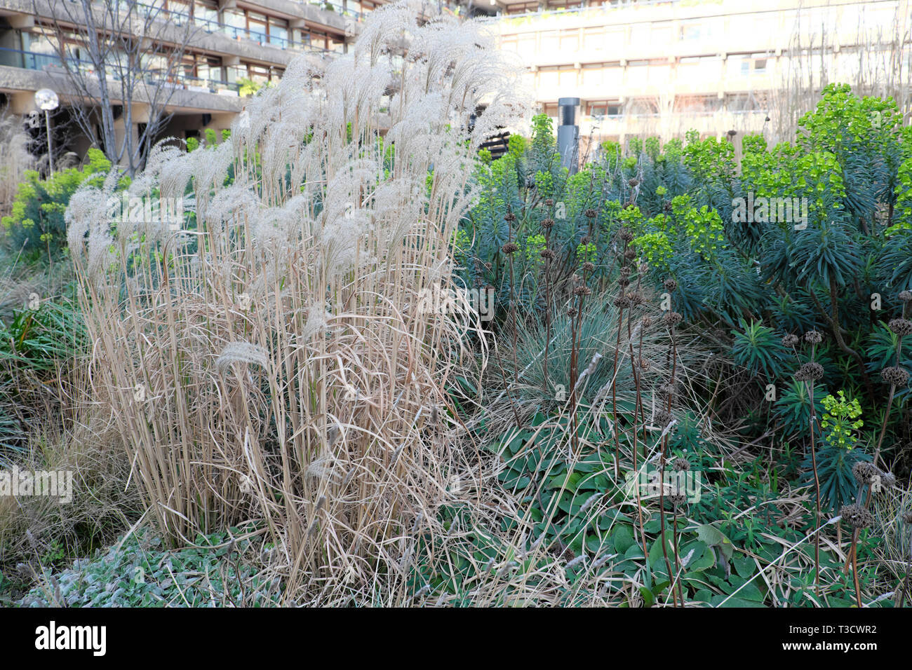 Ornamental Grasses Euphorbias In Bloom In Warm Winter In Beech