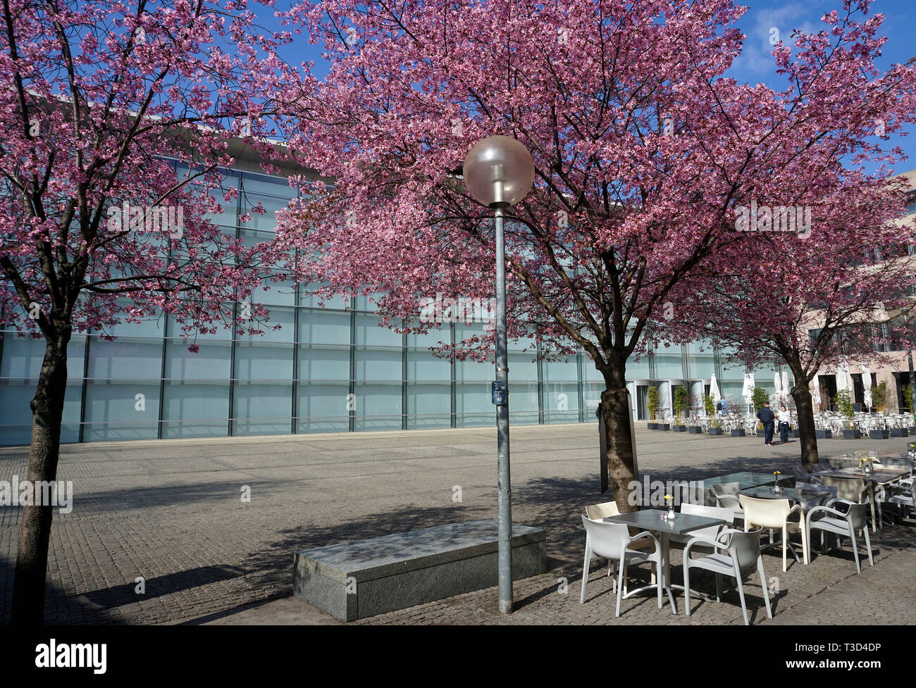 Flowering trees at glas facade of New Museum, museum of art and design, Klarissen place, old town of Nuremberg, Franconia, Bavaria, Germany Stock Photo