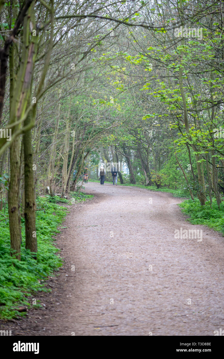 Leg o' Mutton Nature Reserve alongside the River Thames in Richmond upon Thames, London, UK. Walkers on Thames Path tree lined canopy avenue - Stock Image