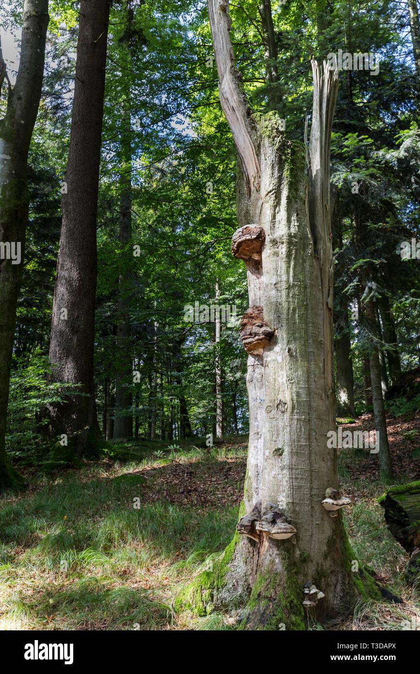 Baernloch-Wanderweg - Stock Image