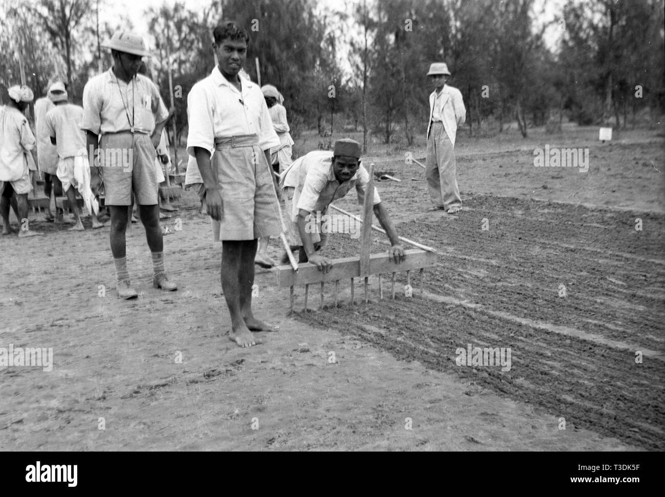 Plantation workers sowing seeds in British India 1945 - Stock Image
