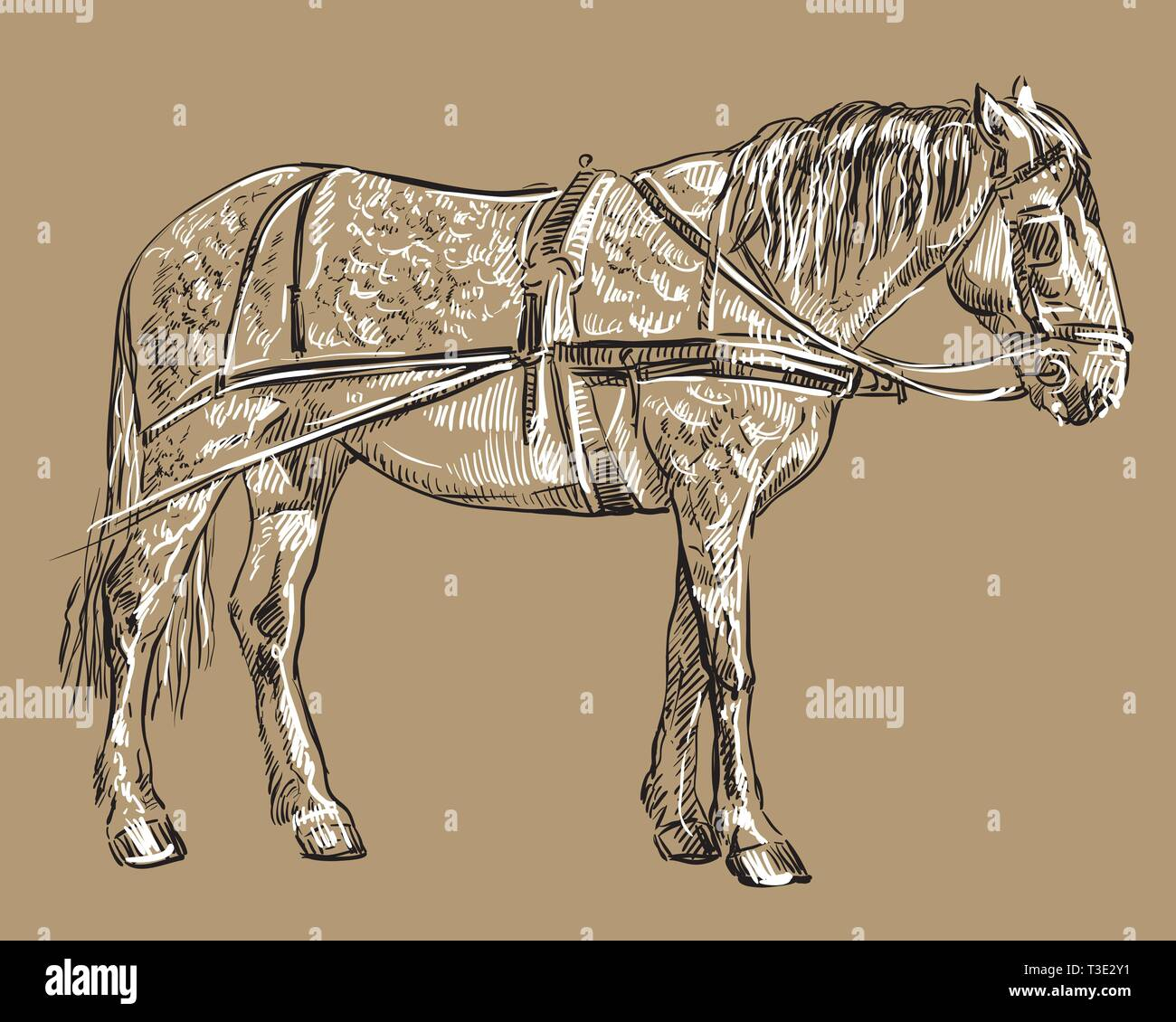 Harness Bridle Stock Photos & Harness Bridle Stock Images - Alamy