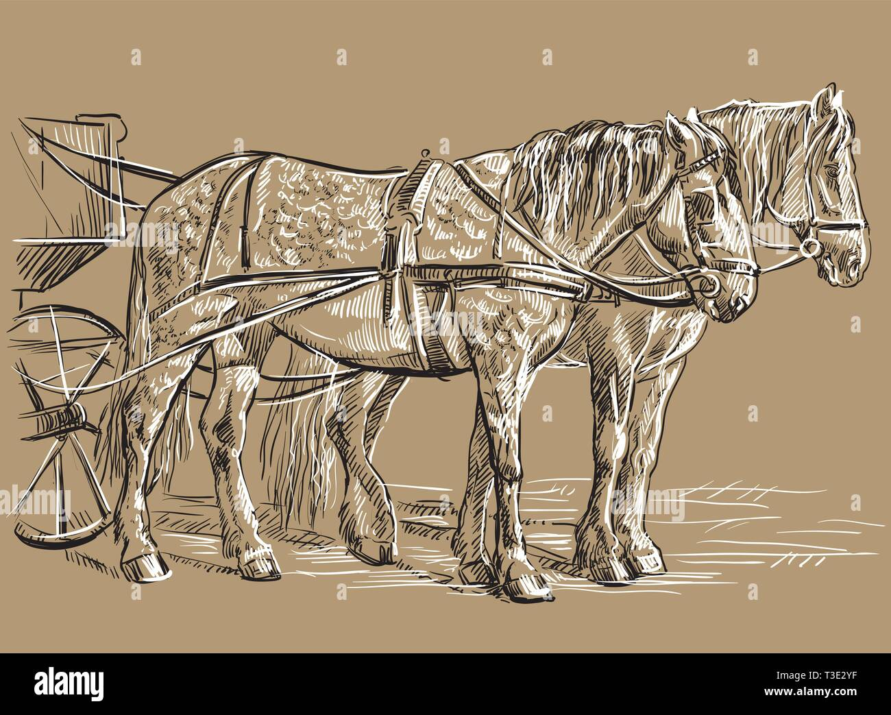 Vector hand drawing Illustration two horses in harness standing in