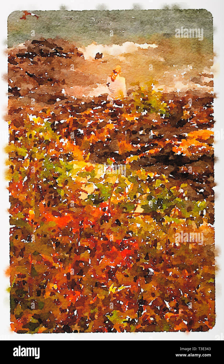 Watercolor of fall colors along the North Shore of Lake Superior, Minnesota - Watercolor by Todd Strand - Stock Image