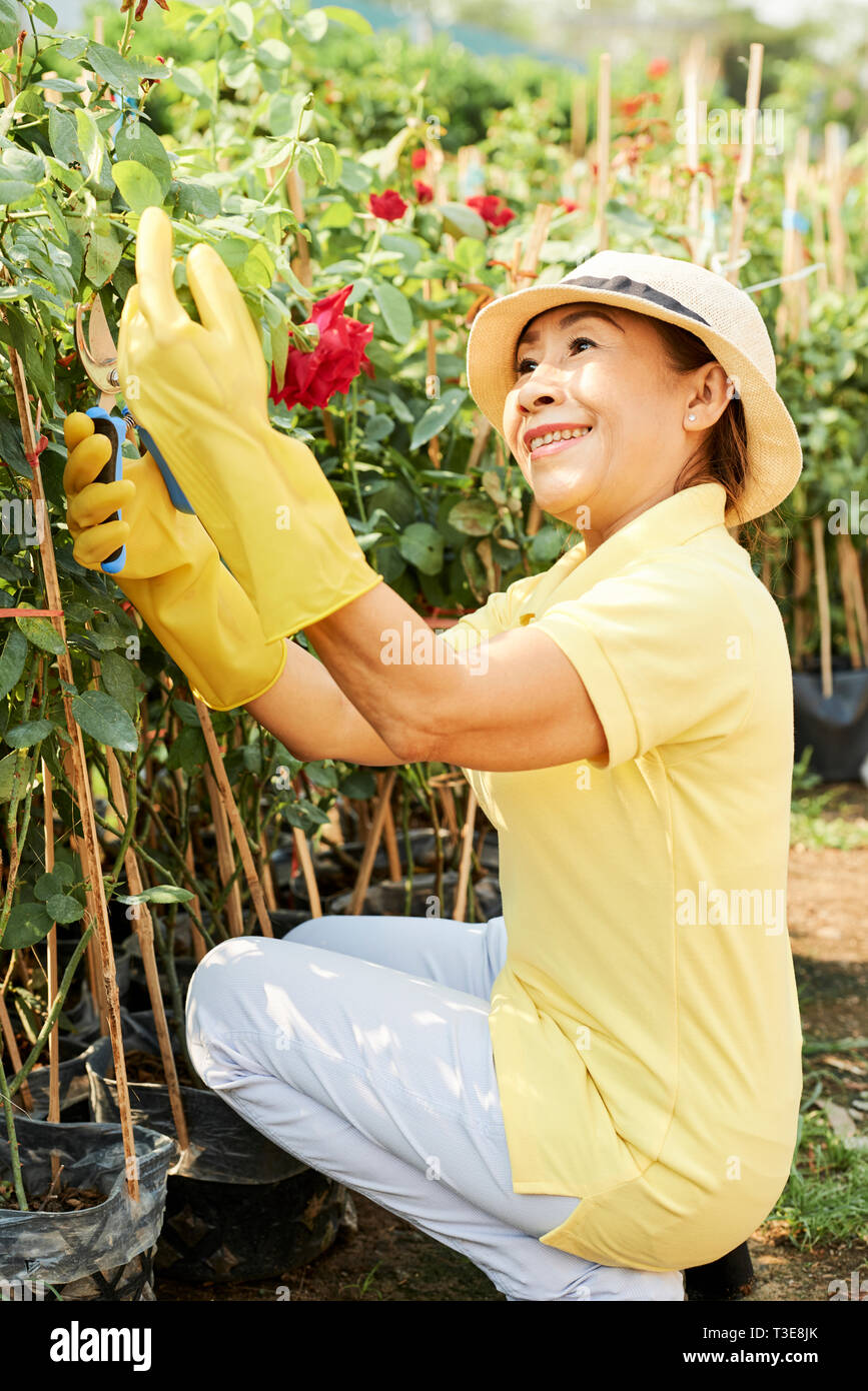 Smiling Woman Trimming Roses Stock Photo 243103243 Alamy