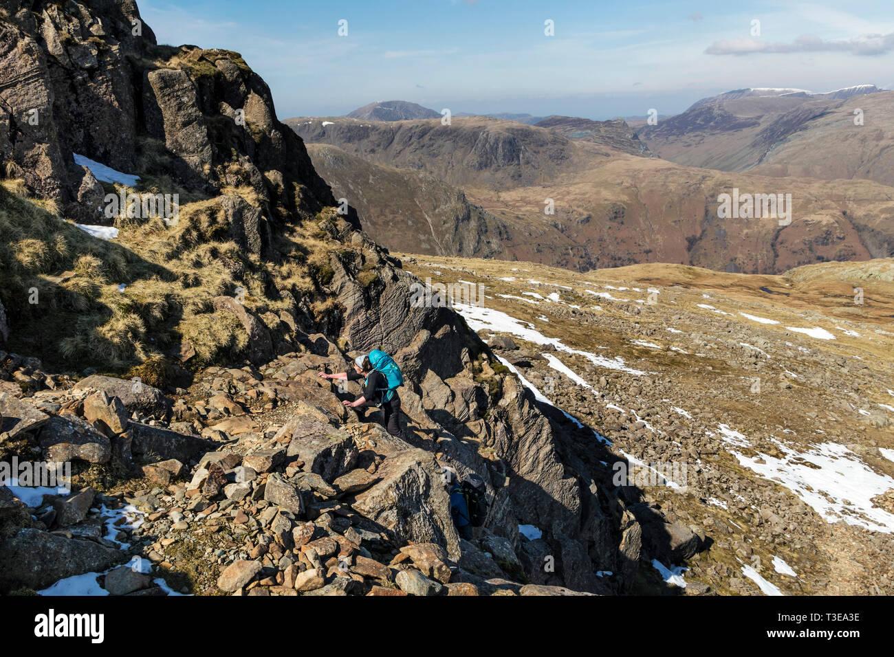Walkers Scrambling up the Niche Route on Glaramara, Lake District, Cumbria, UK - Stock Image