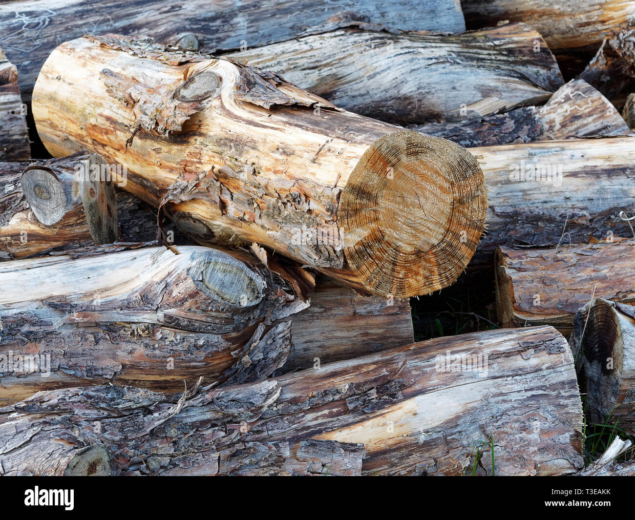 Close Up of haphazardly stacked pile of fire wood - Stock Image