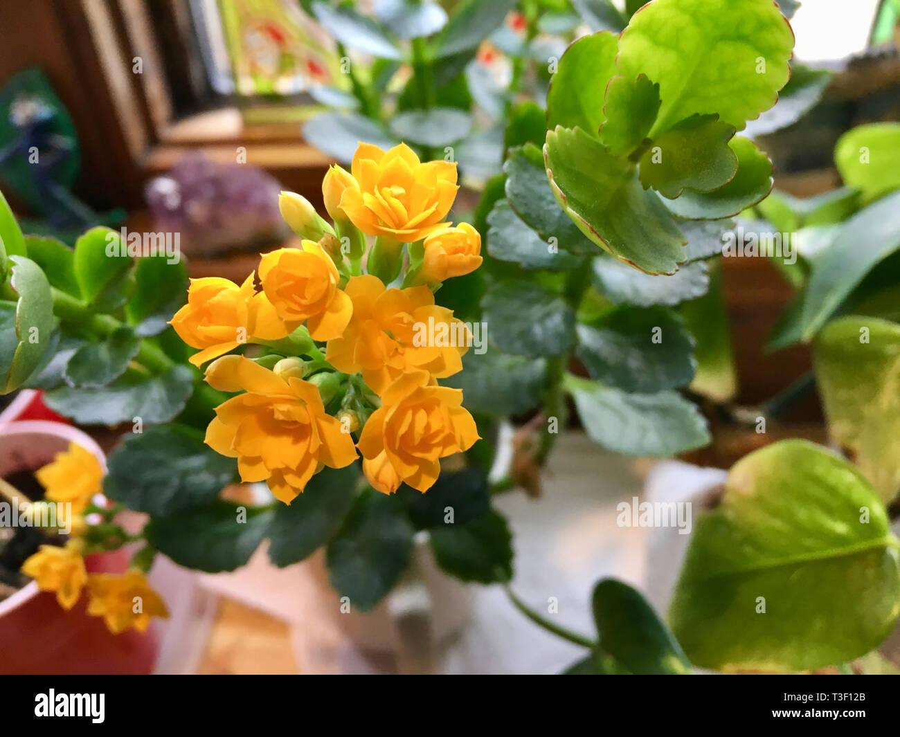 Flowers On Kitchen Window Sill Stock Photos Amp Flowers On