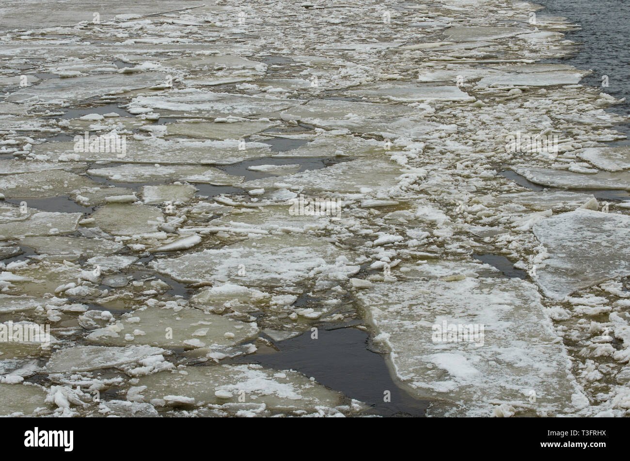 Floating cracked ice and sludge on river - Stock Image