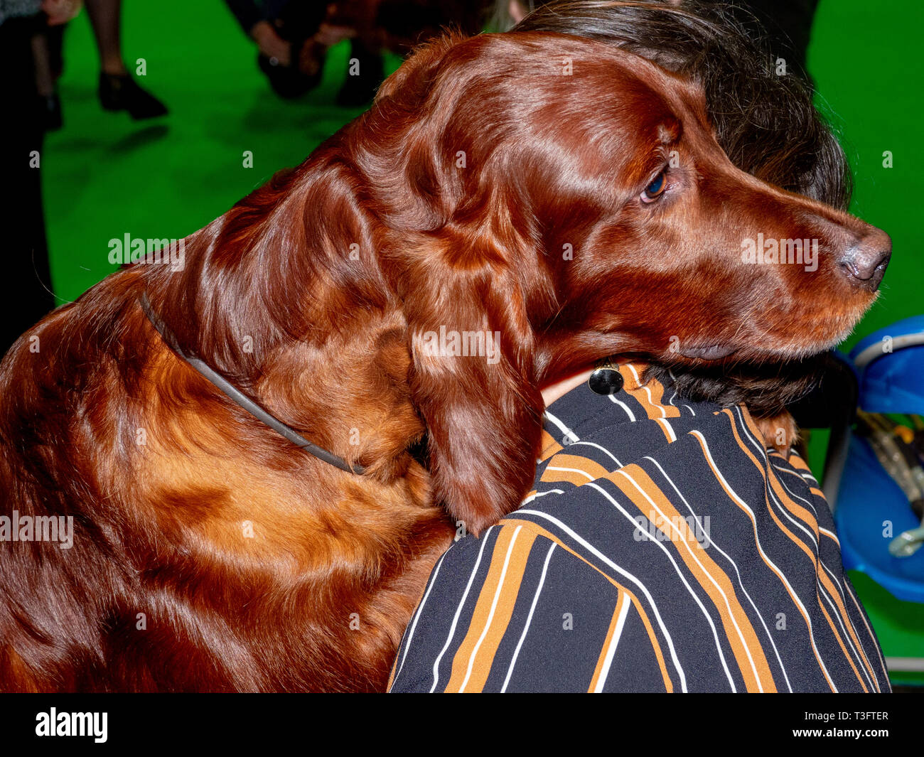 BIRMINGHAM, ENGLAND - MARCH 07: Cuddles at the National Exhibition Centre on March 7, 2019 in Birmingham, England. (Photo by Peter Dench/Getty Images) - Stock Image
