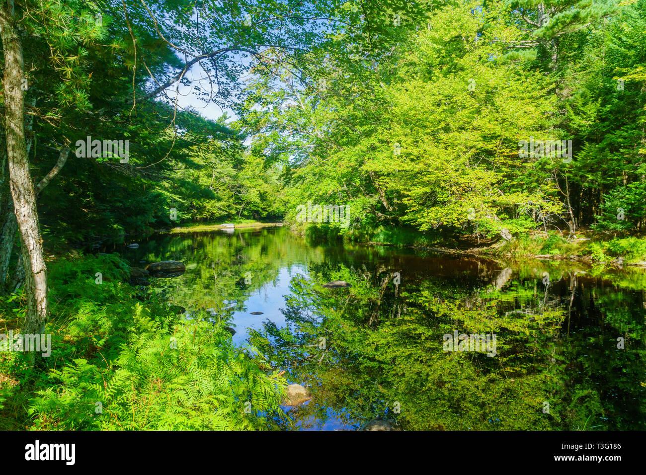 View of the Mersey river, in Kejimkujik National Park, Nova Scotia, Canada - Stock Image