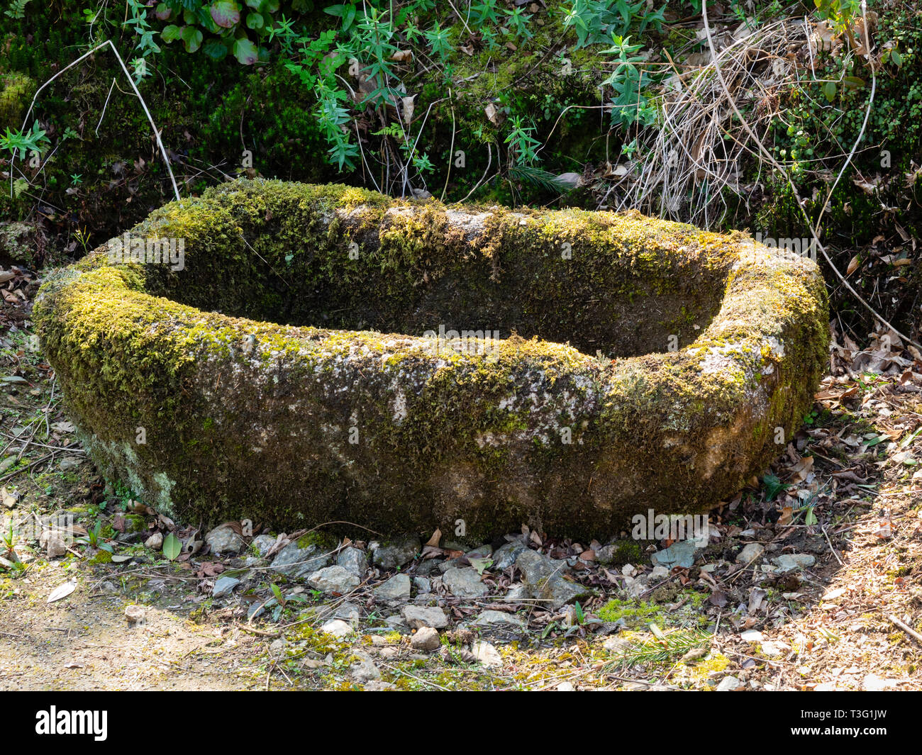 Moss covered, hand carved granite animal trough used as a garden feature - Stock Image