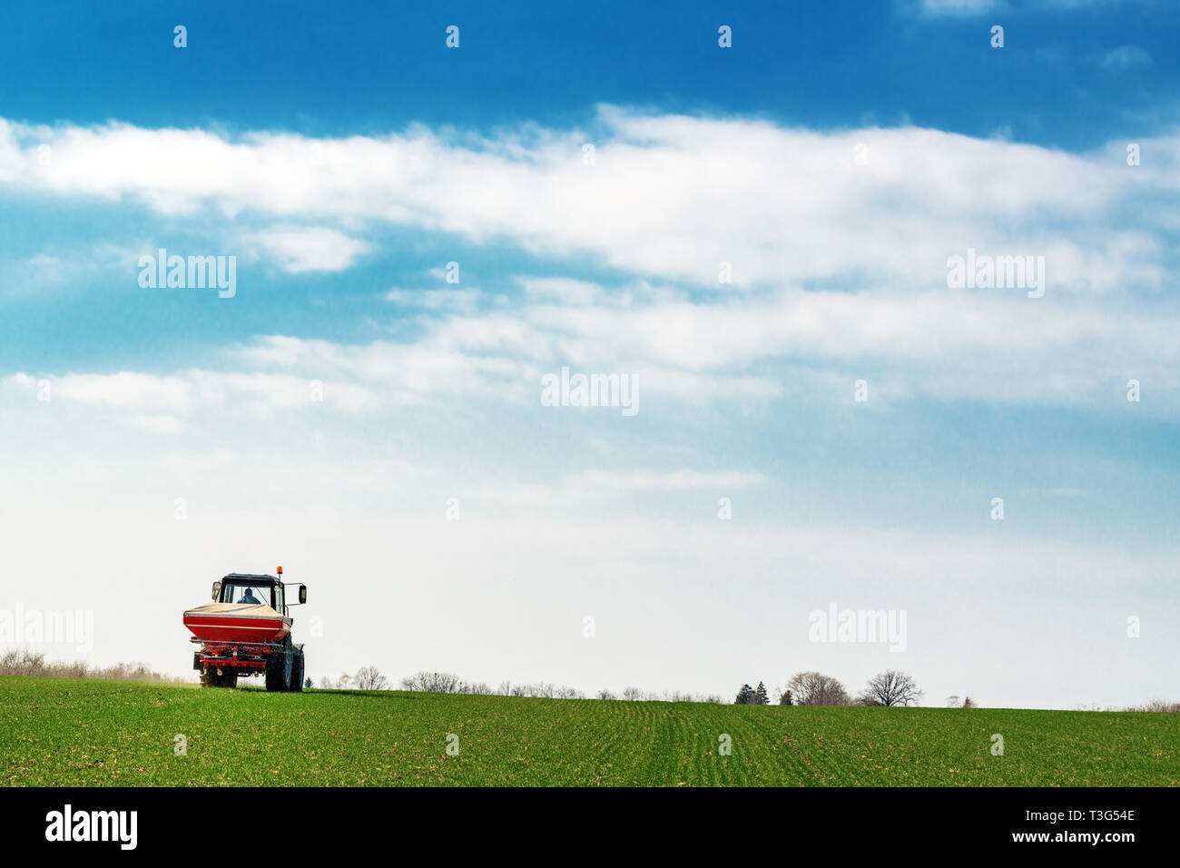 Unrecognizable farmer in agricultural tractor is fertilizing wheat crop field with NPK fertilizer nutrients - Stock Image