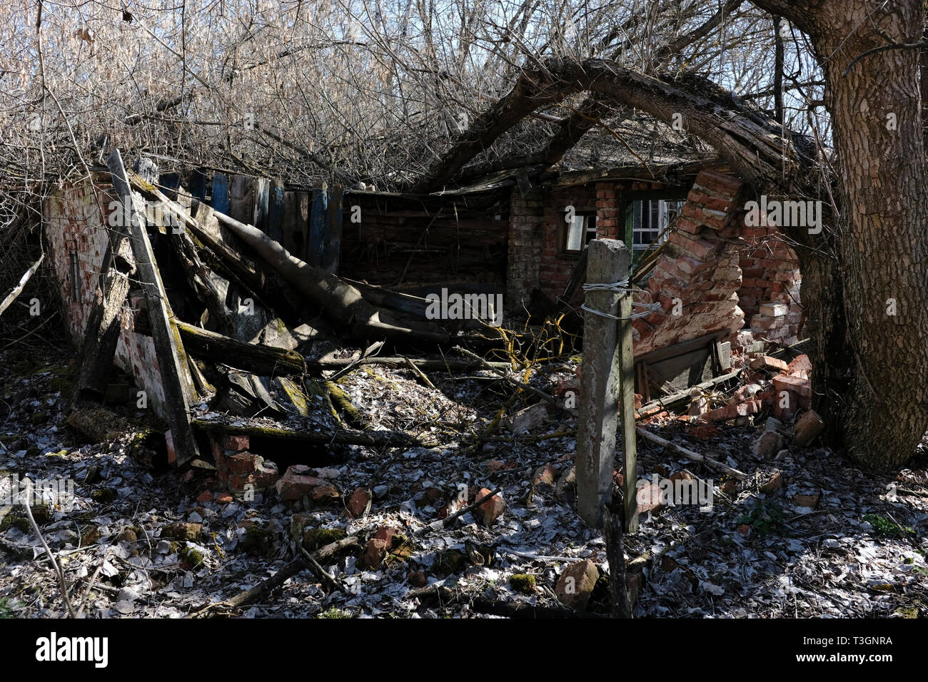 Crumbled village house in the village of Zalissia, inside the Chernobyl exclusion zone - Stock Image