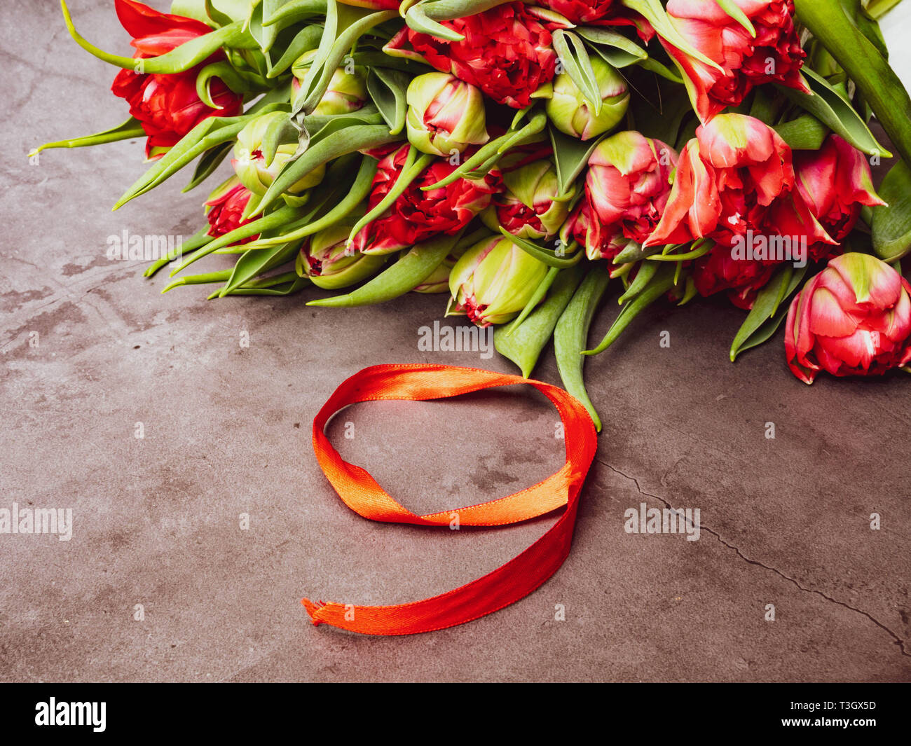 Symbols of memory 9 May, 23 February card concept. Red tulip and red ribbon, copy space, warm colors Stock Photo