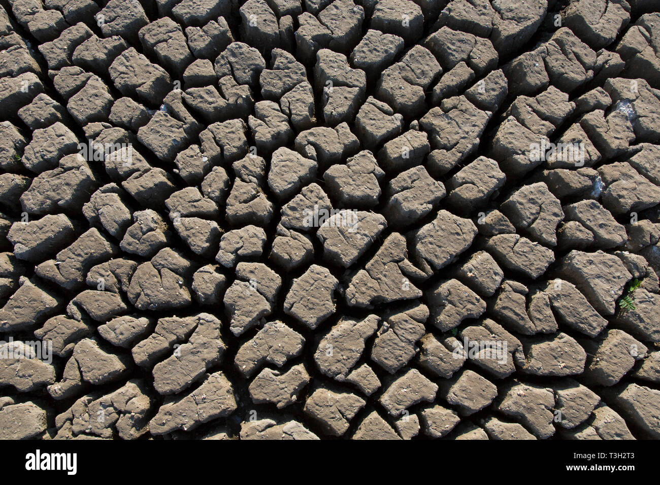 Abstract pattern of dry cracked clay mud in dried up lake bed / riverbed caused by prolonged drought in summer in hot weather temperatures - Stock Image