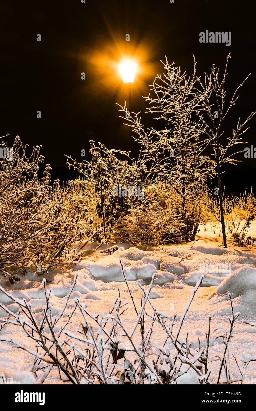 Winter bushes in park and shining lantern. Night shooting in yellow Stock Photo