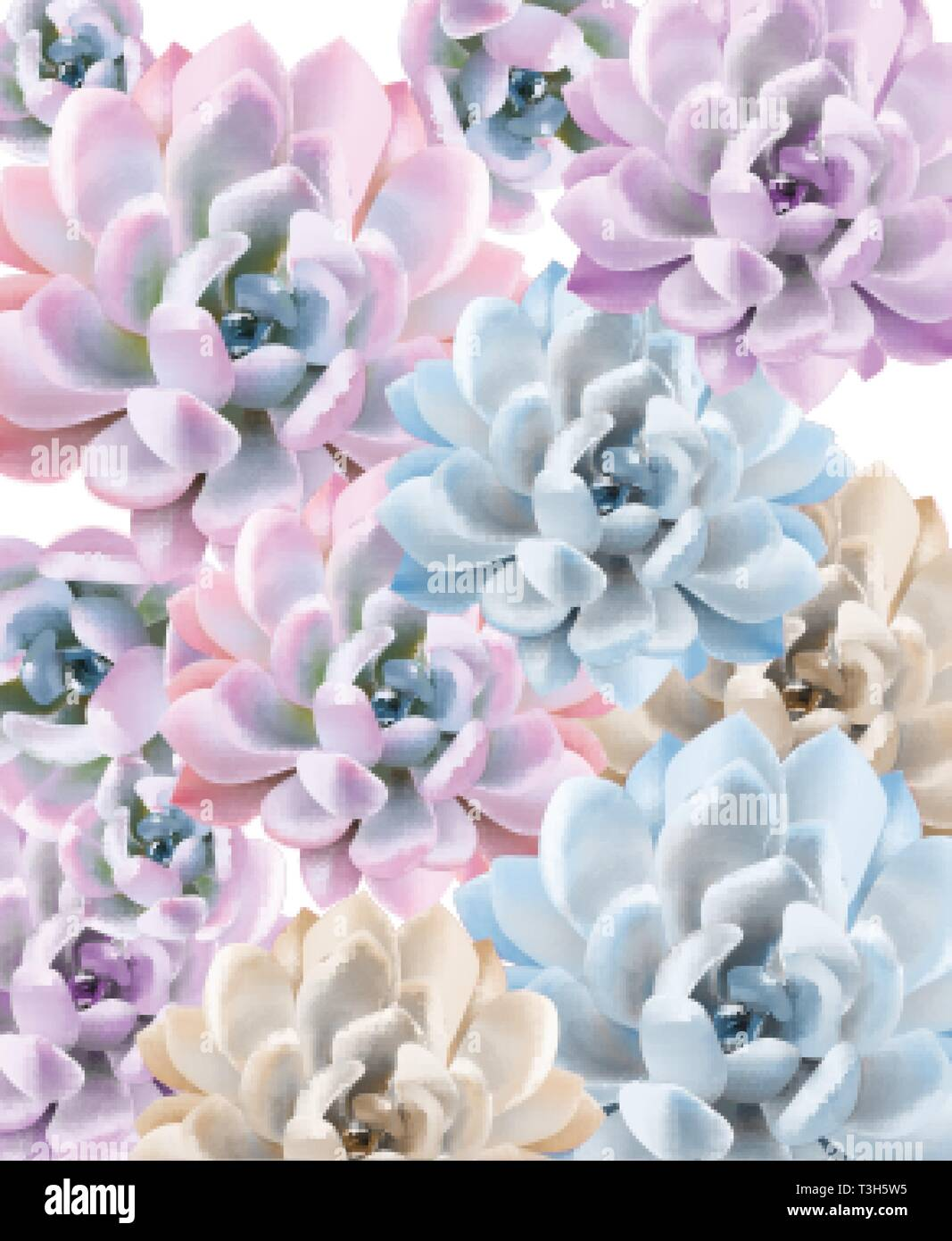 Watercolor Succulent Plant Pattern Vector Hand Painted Vintage Gardening Background Floral Texture Background Stock Vector Image Art Alamy